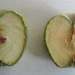 guvenilir-limon-3
