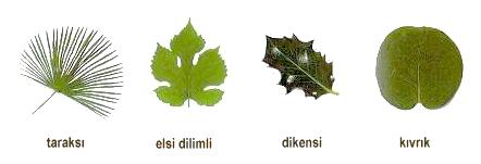 yaprak-defteri-3