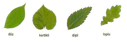 yaprak-defteri-4